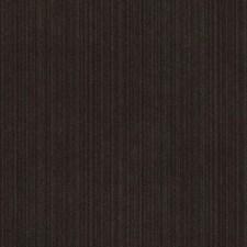 276619 15724 319 Chinchilla by Robert Allen