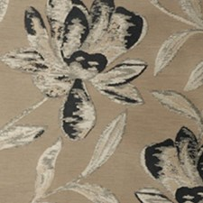 Black Iris Drapery and Upholstery Fabric by RM Coco