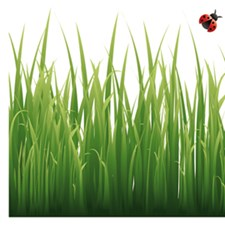 CR-53004 Grass And Ladybugs Border Decal by Brewster